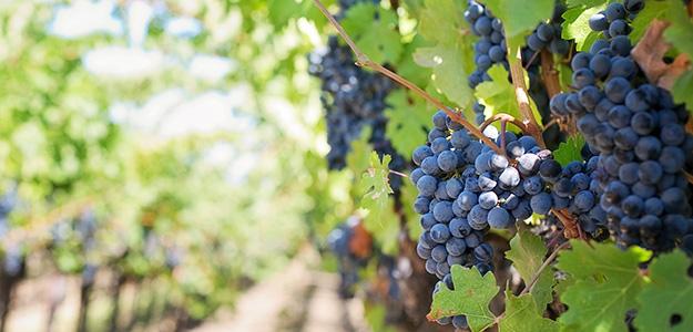 Warsztaty winiarskie w Tokaju